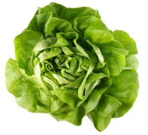 Kopfsalat benötigt keine frische organische Düngung, sondern steht am besten nach einer organisch gedüngten Vorfrucht