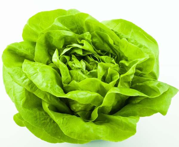 Für den Anbau von Kopfsalat bieten sich überraschend viele Möglichkeiten an, besonders unter Glas und Folie sowie im Mischanbau mit anderen Gemüsearten