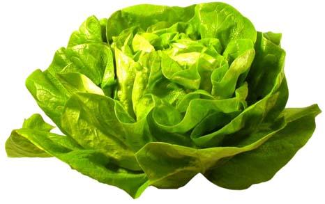 Je früher der Pflanztermin, um so wichtiger ist beim Salatanbau die Verwendung getopfter oder pikierter Pflanzen