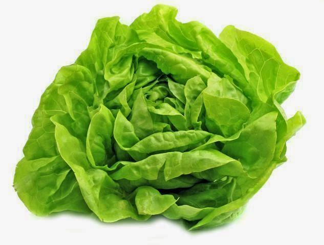 Der Kopfsalat gehört zweifellos zu den beliebtesten Frischgemüsearten und kann im Garten, unter Einbeziehung von Gewächshäusern und Frühbeeten, von Ende April bis November geerntet werden